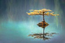 Cuisiner zen: sagesse culinaire